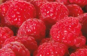 Malina właściwa Polana Rubus idaeus Polana