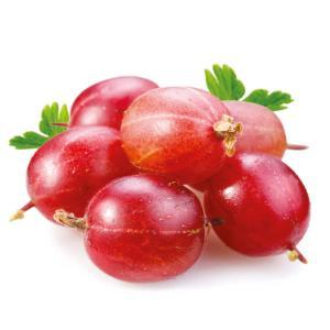 Agrest czerwony Hinnonmaki Rot - KRZEW... Ribes uva-crispa Hinnonmaki Rot