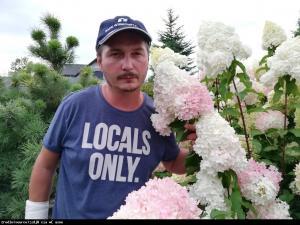 Hortensja bukietowa FRAISE MELBA - prawdzi... Hydrangea paniculata Fraise Melba...