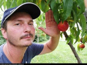 Nektaryna Harblaze - DESEROWA, SOCZYSTA... Prunus persica var. nucipersica HARBLAZE...