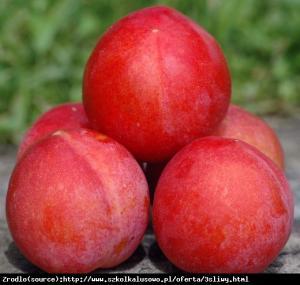 Śliwa Skoropłodnaja - AROMATYCZNA I SŁO... Prunus Skoropłodnaja