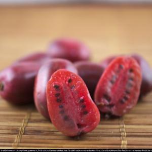 mini Kiwi aktinidia ostrolistna  Kens Red ... Actinidia arguta  Ken s Red