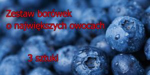 Zestaw borówek o największych owocach (3... Zestaw