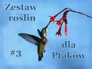 Zestaw roślin dla Ptaków (mix 3) Zestaw
