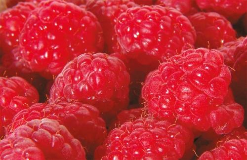 Malina właściwa Polana - Rubus idaeus Polana