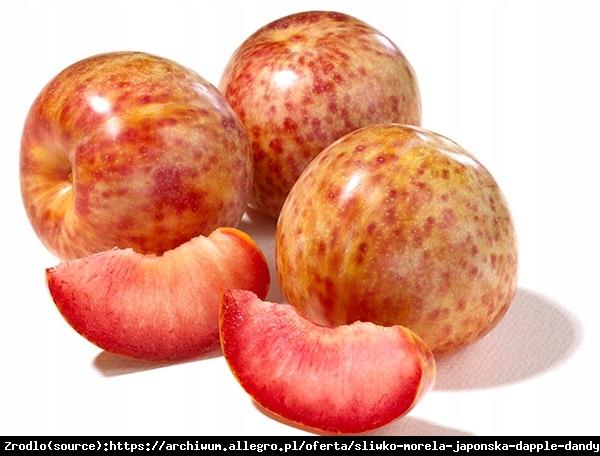 Śliwo-morela DAPPLE DANDY - WYBORNY SMAK, SOCZYSTY i SŁODKI OWOC - Prunus sp.