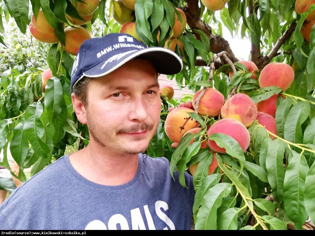 Brzoskwinia Harnaś - SOCZYSTA, DOBRZE ODCHODZI OD PESTKI - Prunus persica HARNAŚ