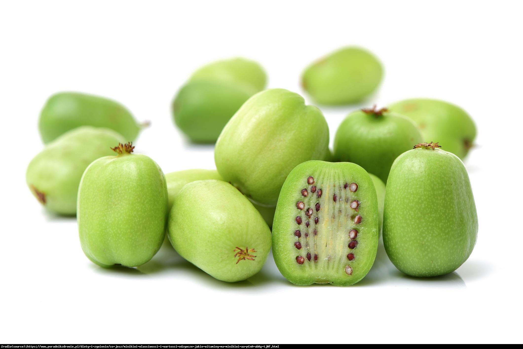 Mini Kiwi Aktinidia ostrolistna Jumbo  - Actinidia arguta  Jumbo