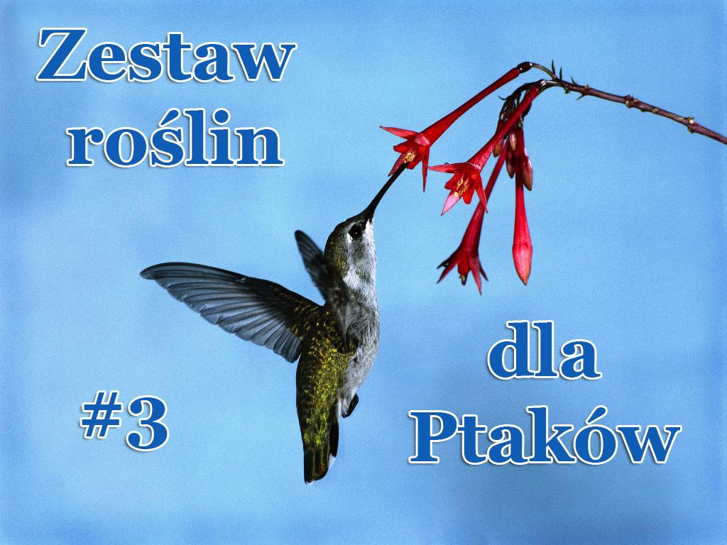 Zestaw roślin dla Ptaków (mix 3) - Zestaw roślin