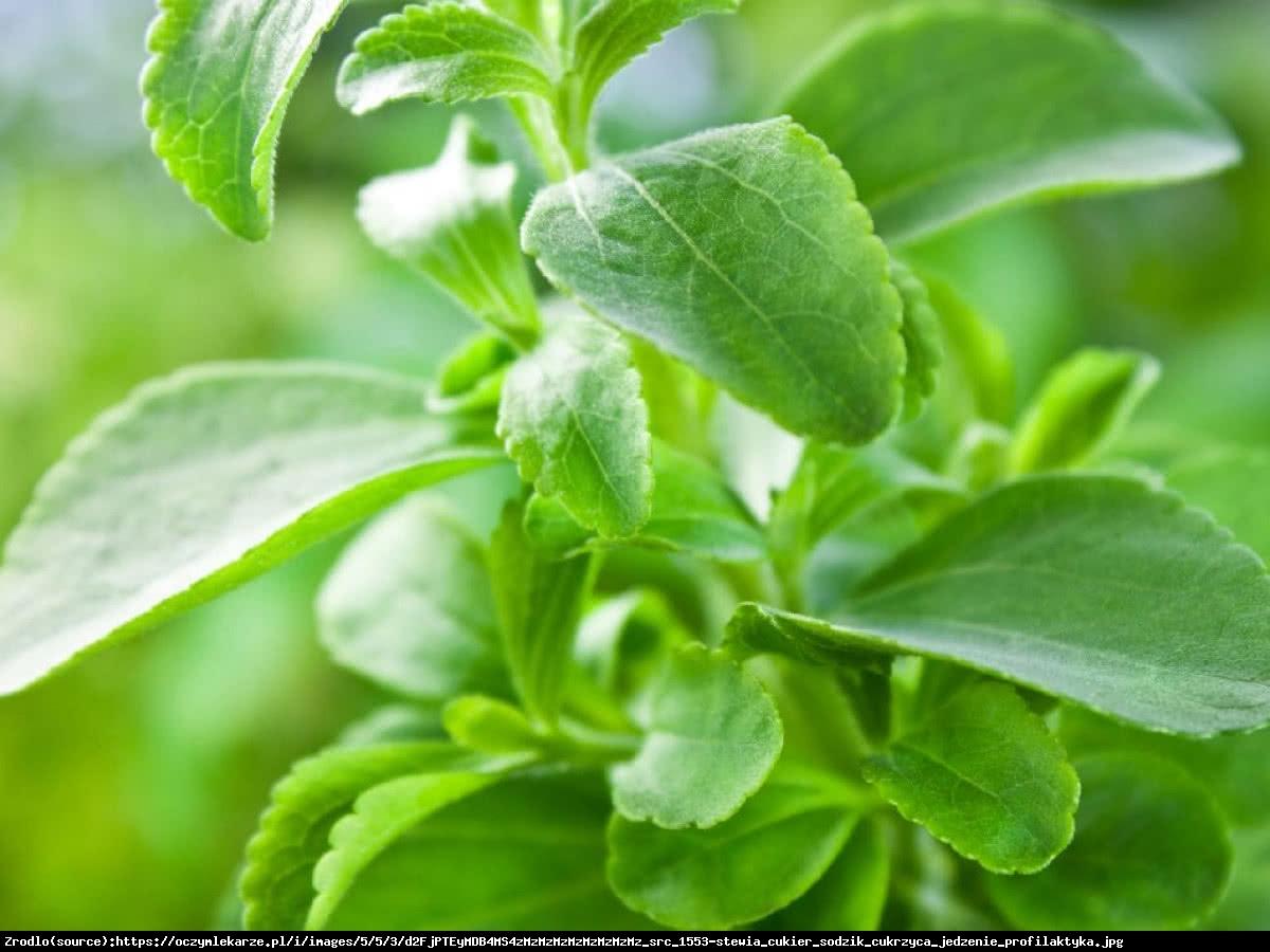 Stewia - Stevia